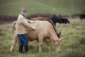 "Vic with one of his breeder cows ""Honey"""